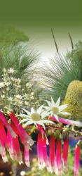 Plants of OP cover
