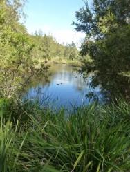 A5. Lime Kiln Bay wetlands